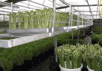 HorticulRack