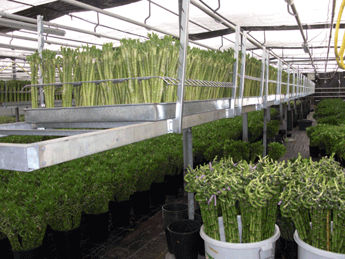 HorticulRack 6