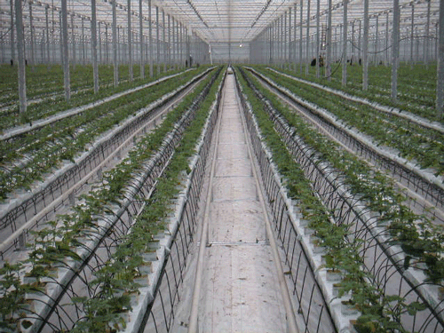 HorticulRack 8