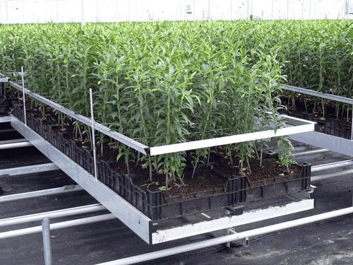 HorticulRack 11