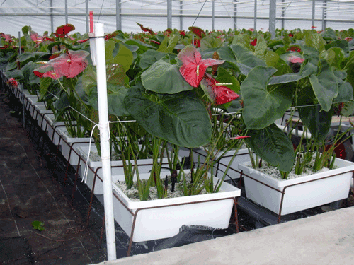 HorticulRack 12