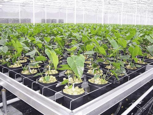 HorticulRack 2