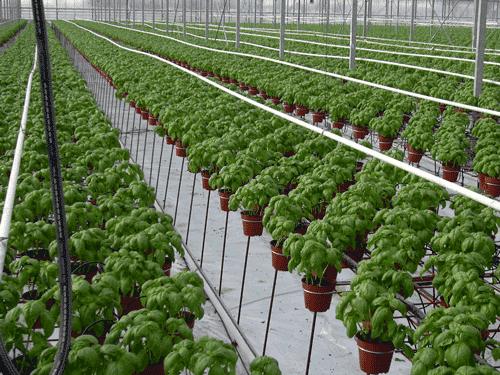 HorticulRack 3